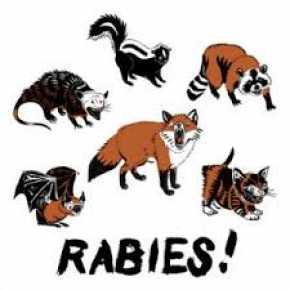 6000 Hewan Penular Rabies Sudah Divaksin