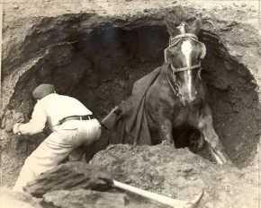 Pesan Moral Dari Kisah Seekor Kuda Terperosok Kedalam Sumur