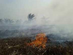 Sejumlah Lsm Kehutanan di Riau Minta Pemerintah Realisasi Janji Perhutanan Sosial Rakyat