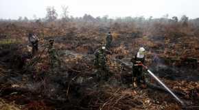 BRG Restorasi Lahan Gambut Rusak Tanah Adat Riau