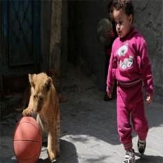Waduh, Anak Singa Berubah Jadi Hewan Peliharaan Keluarga di Gaza