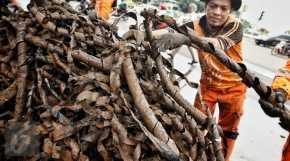 Sampah Kulit Kabel Bertambah 3 Truk, Dari manakah asalnya ?