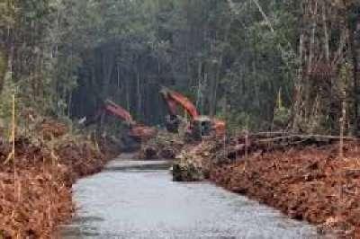 Peneliti: Riau Perlu Bangun Kanal Blocking