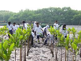 107 Mahasiswa Unilak Hijaukan Kawasan Pesisir Sungai Apit dengan Mangrove