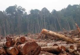 Perambah Hutan Cagar Biosfer Diringkus Polres Bengkalis