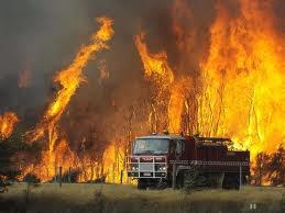 IAW: Izin Hutan Kerap Diselewengkan Perusahaan