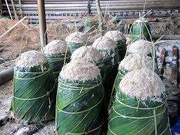 Sagu  Berpotensi Gantikan Impor Terigu Di Riau?
