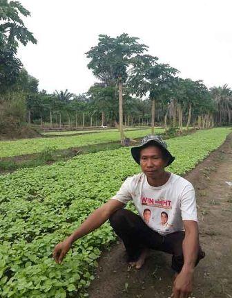 /Demam/ Suryono, Banyak Petani Riau Beralih dari Sawit ke Sayuran