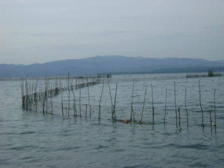 Kembangkan Budidaya Ikan Air Tawar, Diskanlut Rohil Bangun Dua BBI