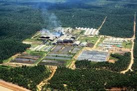 Tahukah Anda, 5 Juta Hektare Hutan Alam Riau Hilang Selama 30 Tahun