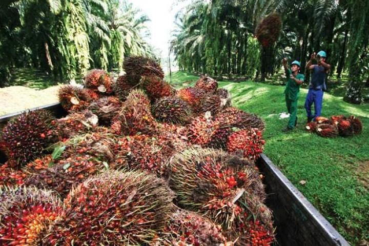 Sawit di Riau Naik jadi Rp 2.297,95/Kg
