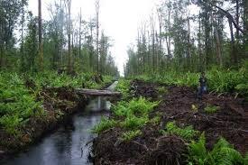 JMGR Serahkan 44.998 Hektar ke KLHK untuk Hutan Sosial