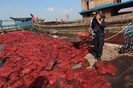 Kerja Mubazir, BC Dumai Kembali Musnahkan 46 Ton Bawang Merah Ilegal