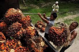 Pengusaha India Serukan Boikot Sawit Malaysia