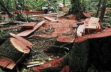 Pembalakan Liar Ancam Cagar Alam Bukit Bungkuk XIII Koto Kampar
