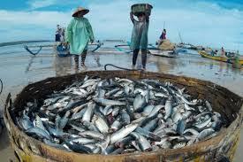 Hasil Tangkapan Meningkat  Sejahterakan Nelayan di Riau