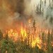http://radarpekanbaru.com/assets/berita/thumb/45kebakaran-hutan-1.jpg